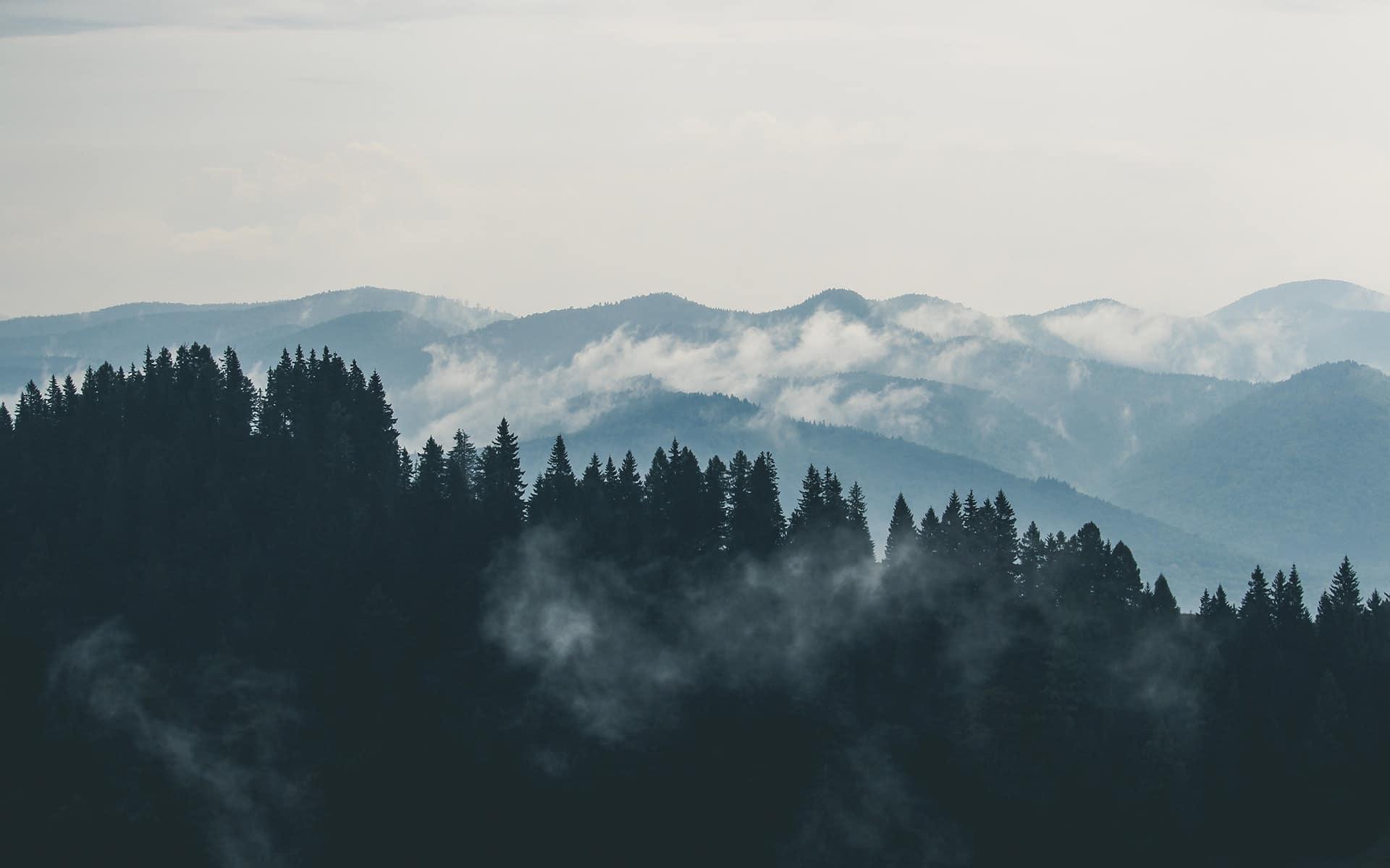 Wald und Berge im Nebel