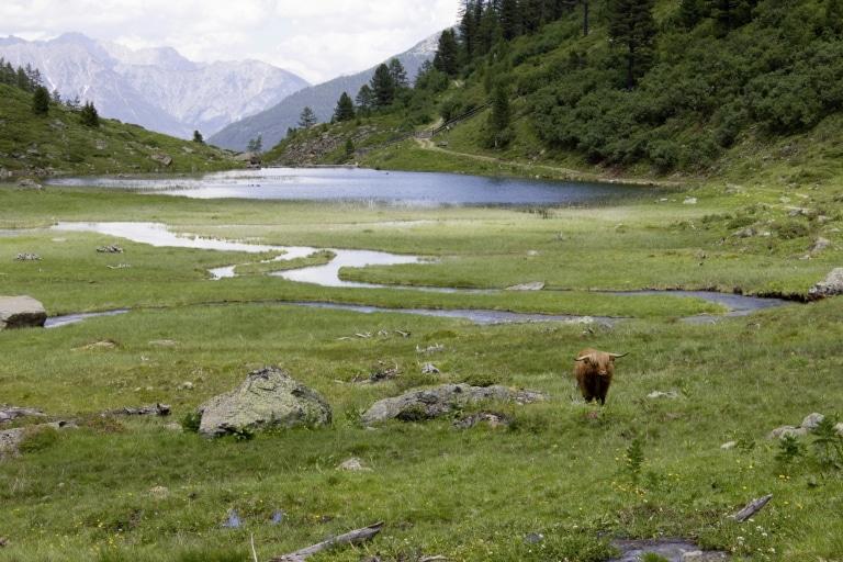 Bergsee im Urgtal mit Rind